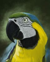 Parrot Study by 8kx