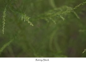 green plant Texture by Rainny-Stock