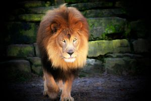 The King by TlCphotography730