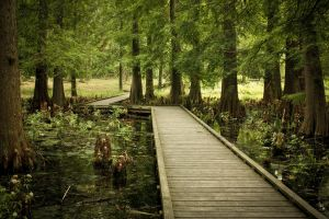 Cypress bog by Manduhxinfected