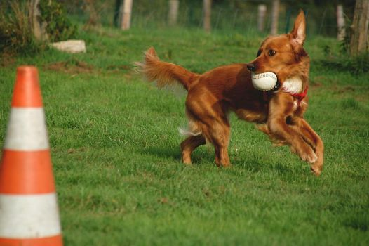 dog catching ball in sunlight by Ailime-Ael