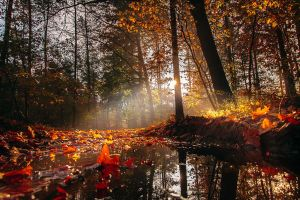 Autumn in Holland now.......... by Betuwefotograaf