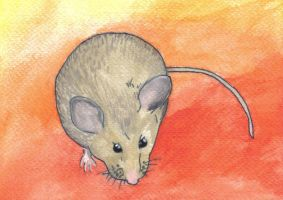 a mouse by paivansade