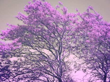 stock free   * Pinky Tree * by little-one-girl