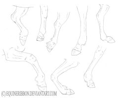 Equine leg study by EquineRibbon