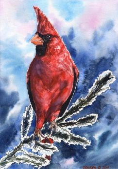 Red Cardinal by GeorgeArt23