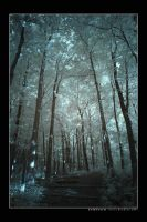 Cold Forest by DarknessAndLight