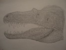 Gorgosaurus libratus head by Xezansaur
