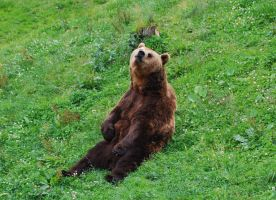 Relaxing bear by hecatehell