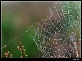 web dew by imnotu