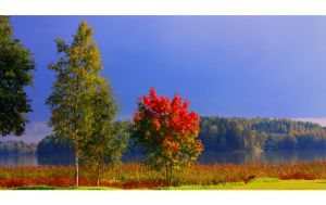 Autumn 043 by ximocampo