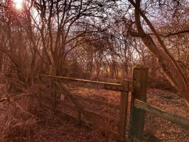 Broken Down Gate - Brampton Woods by davepphotographer