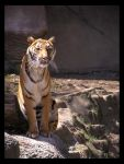 The Chinese Tiger by Impatience