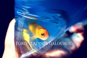 LORD VLADIMIR GALOUBOY. by tarmasz