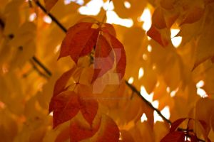 Translucent Fall by KingPinPhotography
