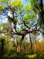 Swamp tree by Heidipickels