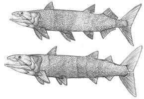 Barracudacanths by PeteriDish