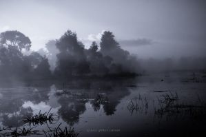 Drysdale Lake in fog by Peter-Cassar