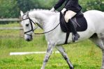 Dressage Stock 009 by HKW1994