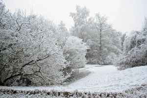 winterland 40 by priesteres-stock