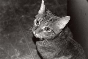 Cat Photo Print by dogboy09