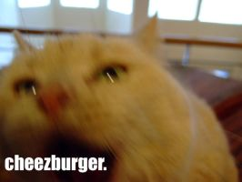 cheezburger. by LOL-Cat