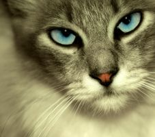 TheCat by agoni
