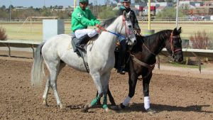 Racehorse Stock 17 by Rejects-Stock