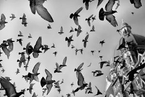birds by guzin-guzin