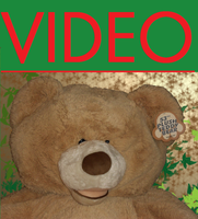 VIDEO- Teddy Bear Suit Auction -Sold by CeshionCo