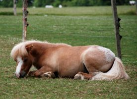 Cuddles Stock 2 by LRG-Photography