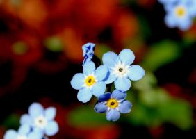 Little Blue Wild Flowers by mjvj56