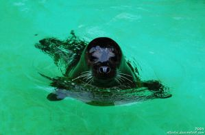 Seal from Pearl Harbor? by Allerlei