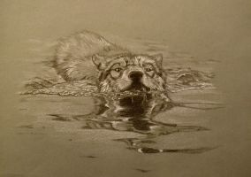 Swimming Wolf by jurassic92