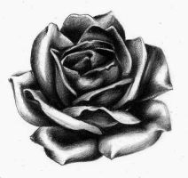 Rose practice tattoo design by LarcDEAR