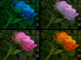 Beauty comes in many colors by flashmind