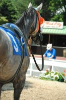 Racehorse Stock 48 by Vance-Equine-Stock
