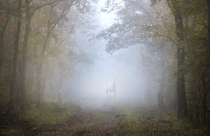 White horse in the forest by hofhauser