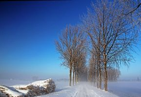 Winter in foggy Holland by Betuwefotograaf