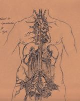 Human Urinary System by Silvercresent11