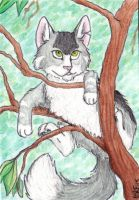 ACEO I wonder how high i can climb by RiiThePup