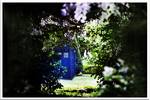 In The garden by SilverPixiGirl
