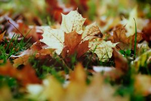 2010th autumn by YesterdayDreams