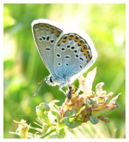 Butterfly macro 3 by selley