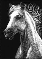 scratchboard white horse by 3Beccaboo