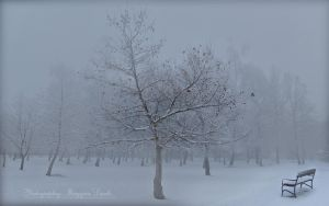 Hungarian landscapes. February. by magyarilaszlo