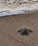 Loggerhead turtle stock 2 by JSF1