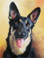 my german shepherd Gina by bubumo