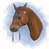 Realism Attempt - Horse by tailfeather