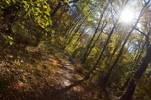 Sunny forest 2 by Naca007